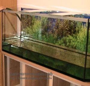 Бизнес с 100% наценкой – работаем с аквариумами