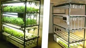 бизнес в домашних условиях, бизнес на зелени, малый бизнес для начинающих, бизнес по выращиванию зелени