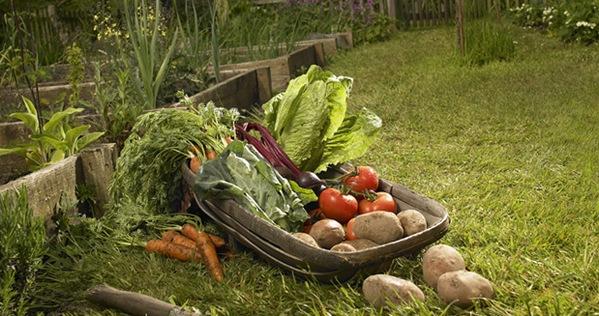 Биопродукты, органик то, что делает нас здоровыми