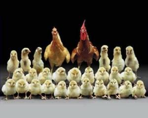 Семейный бизнес, идеи семейного бизнеса