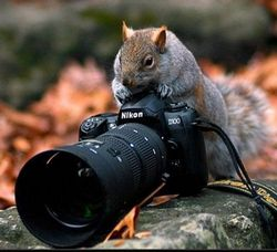 Зарабатываем в сети на фотографиях – бизнес без капитала