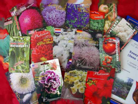 Бизнес на продаже семян