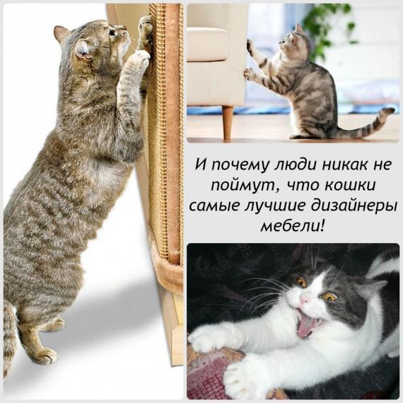 коллаж с кошками