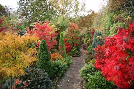 японский садик осенью