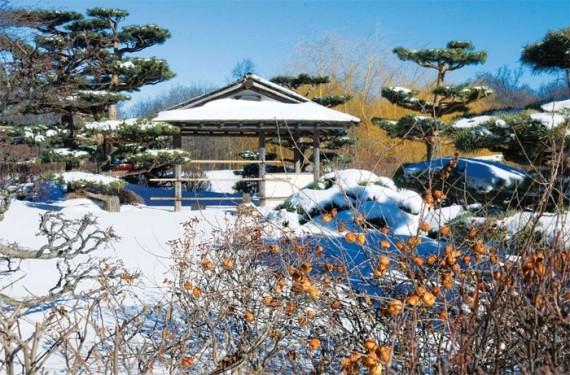 ландшафтный дизайн в зимнее время