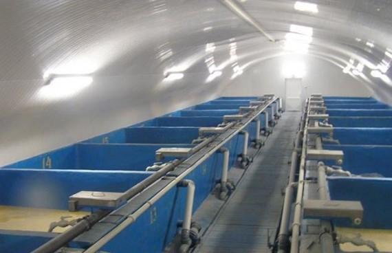 Выращивание раков в аквариуме происходит быстрее, чем в искусственных водоёмах