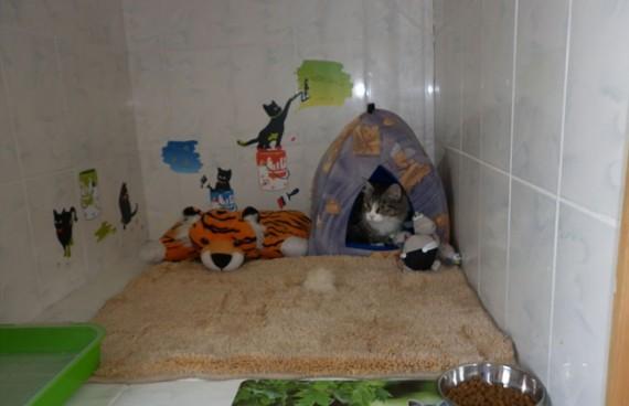 кошка в зоогостинице