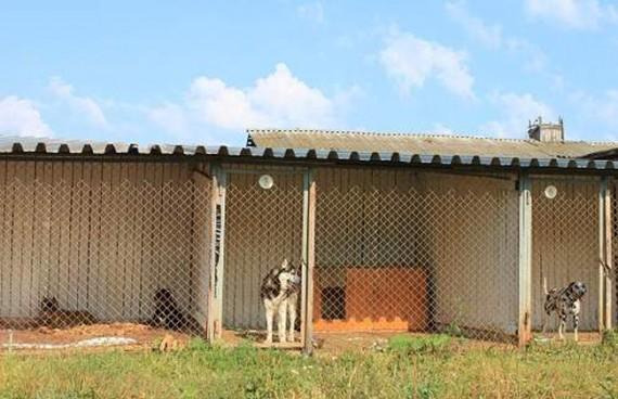 собаки в вольерах