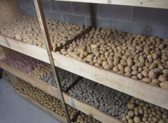 Место для хранения картофеля