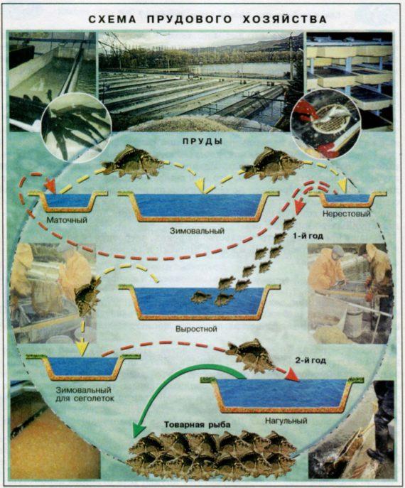 Пруды для выращивания рыбы