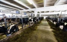 Идея бизнеса – устройство для доения коров