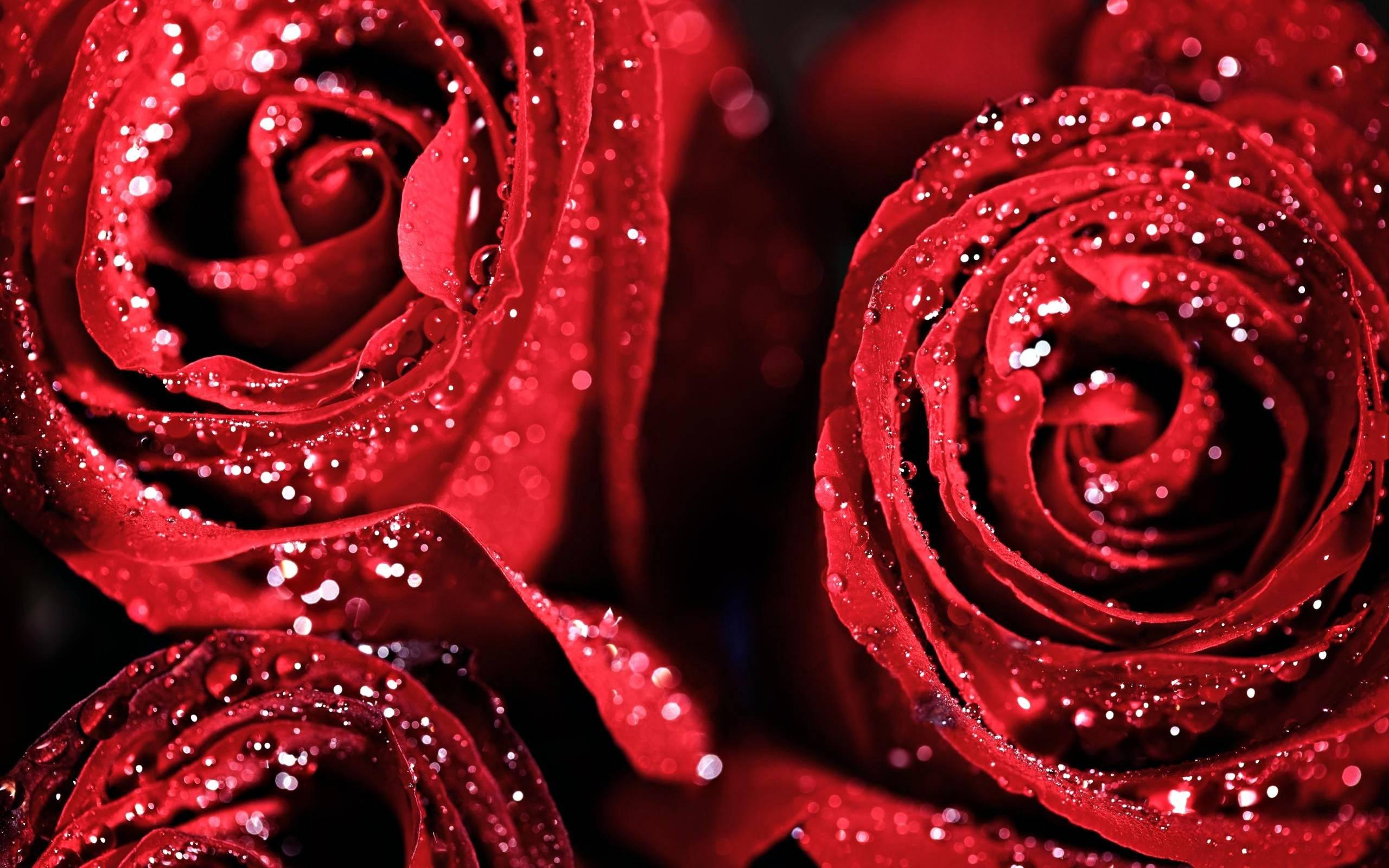 Идея для бизнеса – продаем лепестки роз