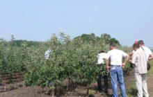 Бизнес на выращивании саженцев
