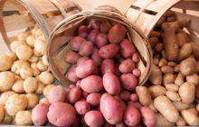 Актуальные идеи для организации бизнеса на основе потребности в еде