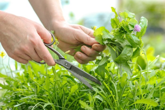 Заработок на сборе лекарственных трав