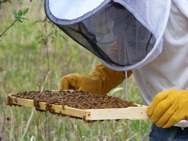 Занятие пчеловодством
