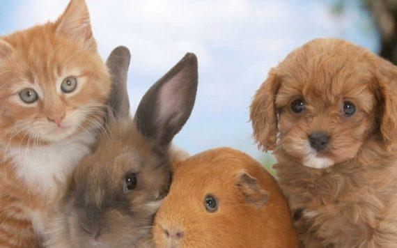 Налог на сельскохозяйственных животных в россии